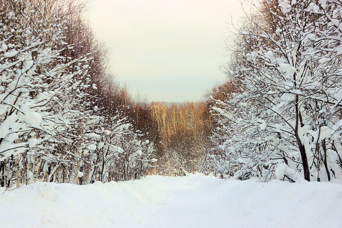 Taiga forest of the cold climates (CCA: Andre Glcechiko).